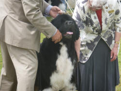 Solomon at 2012 Newfie Nationals
